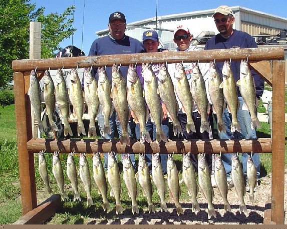 Kaiser group from Wisconsin catching great Oahe walleye