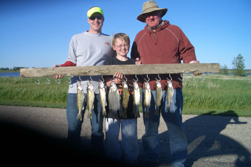 how to catch walleye in june