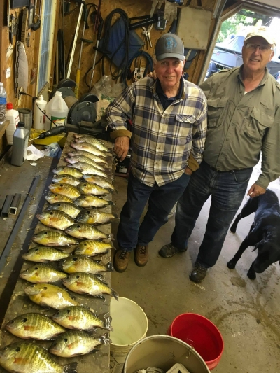 Crappie and bluegill, guided fishing trip.