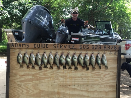 Using Fenwick rods to catch crappie.