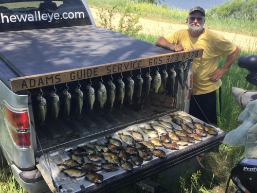 Day's catch of bluegill, crappie and perch